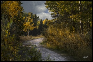 Photographers in Bragg Creek - Gold Photography